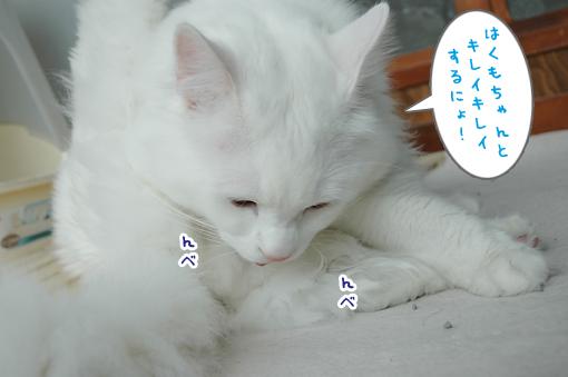 12_20090311010615.jpg
