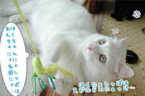 12_20090615233018.jpg