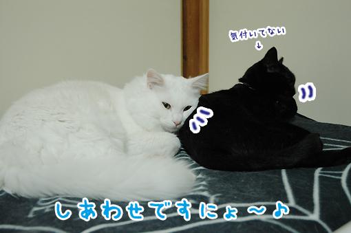 13_20090301202837.jpg