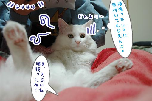 13_20090302184515.jpg