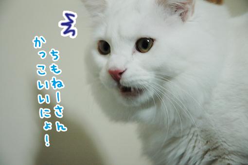 13_20090305233101.jpg