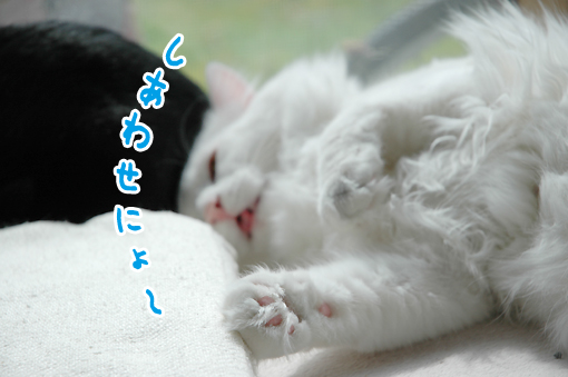 13_20090312013303.jpg