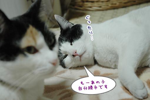 14_20090306180216.jpg