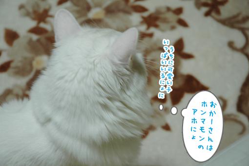 14_20090308174430.jpg