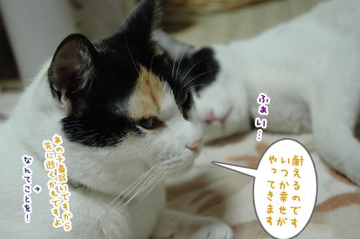 15_20090306180204.jpg