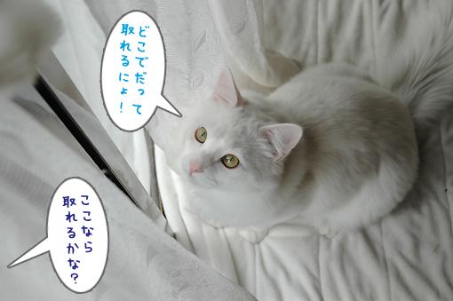 16_20090225203634.jpg
