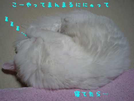 CA330518.jpg