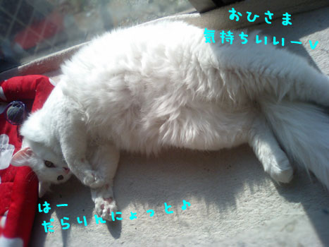 CA330528.jpg