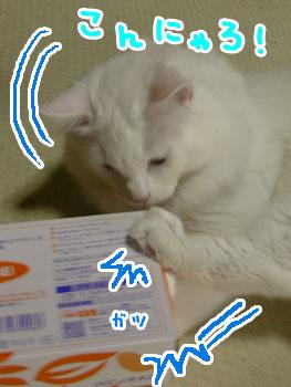 DSCN1624.jpg