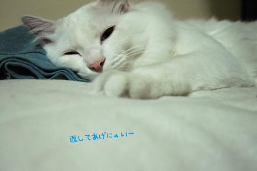 DSC_01_20090116002925.jpg