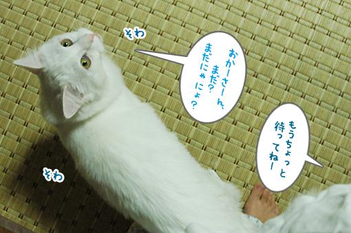 DSC_01_20090116203713.jpg