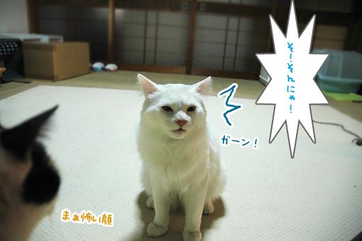 DSC_02.jpg
