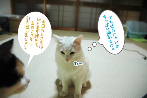 DSC_03.jpg