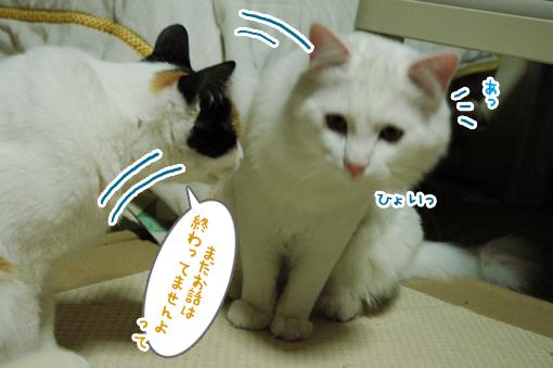 DSC_04_20090116003015.jpg