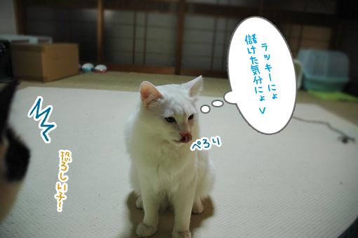DSC_06.jpg