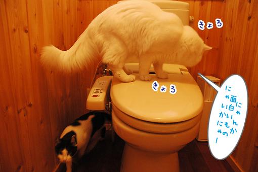 DSC_08_20090122000329.jpg