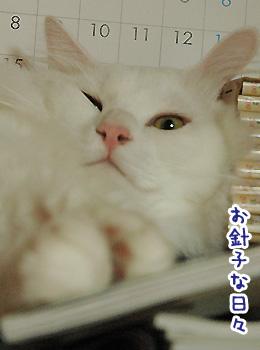 haku_20090901233717.jpg