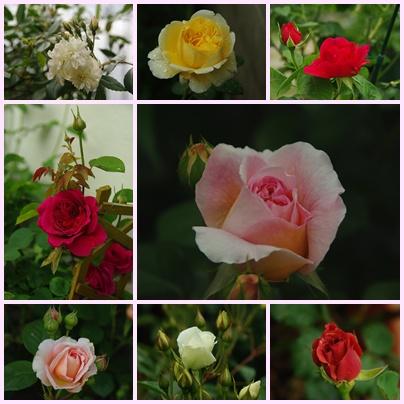 rose2001-2.jpg