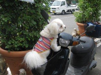 バイクのカゴに入ってるハンナ
