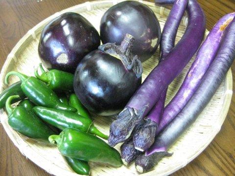 鎌倉産紐茄子と賀茂茄子、ハラペーニョ