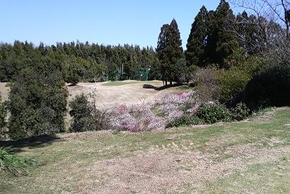 桃ゴルフ2