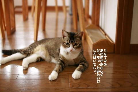 20080810_1516.jpg