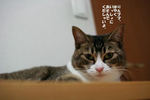 20081208_2285.jpg