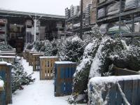 雪のツリー売り場