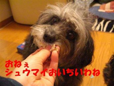 CIMG0863_R.jpg