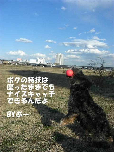CIMG1247_R.jpg