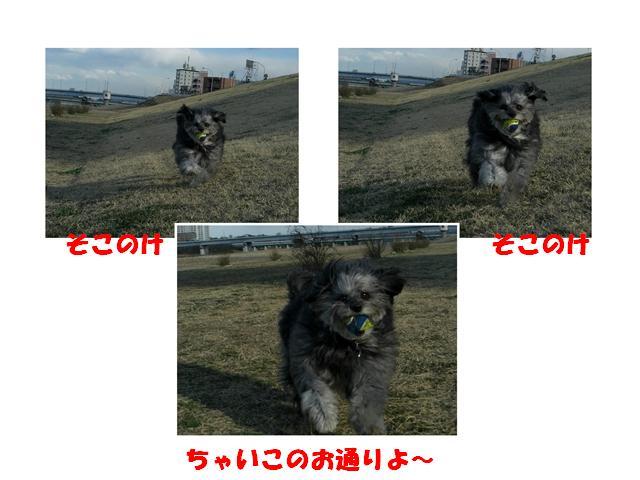 CIMG1353_R.jpg