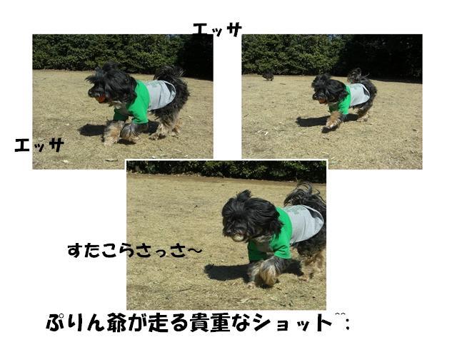 CIMG1519_R.jpg