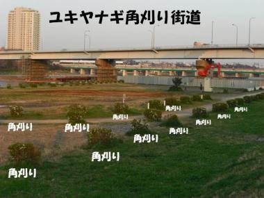 CIMG1706.jpg