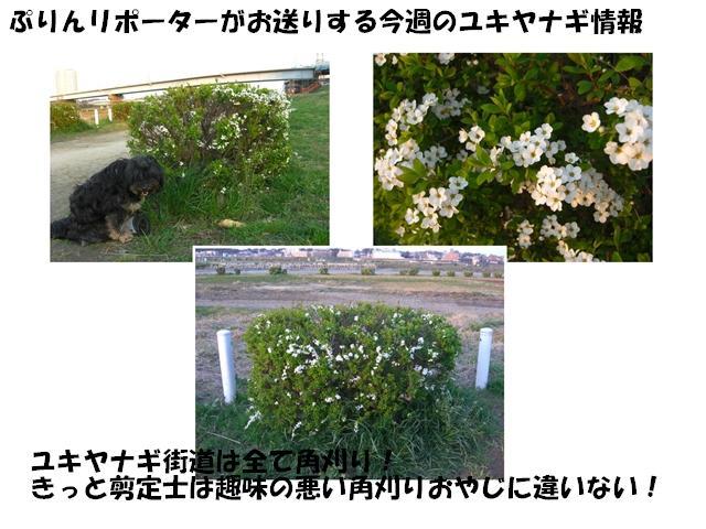 CIMG1878_R.jpg
