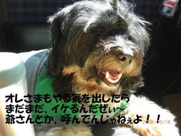 CIMG3388_R.jpg