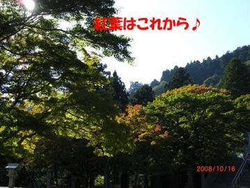CIMG3503_R.jpg