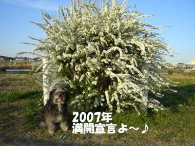 CIMG8392_20080323230801.jpg