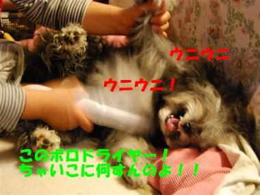 DSC_0956_R.jpg