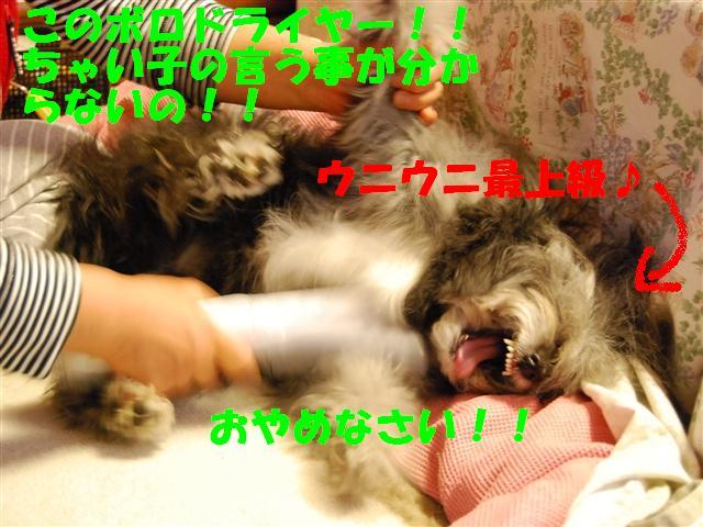 DSC_0965_R.jpg