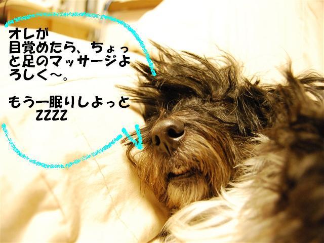DSC_1403_R.jpg