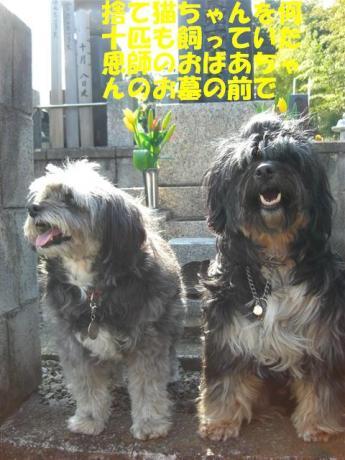 hakamairi_R011_20080328003418.jpg