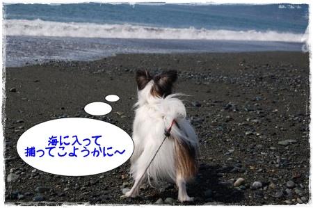 ラッキーと海3