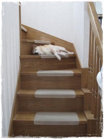 階段のど真ん中