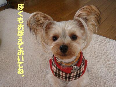 PHOTO005.jpg