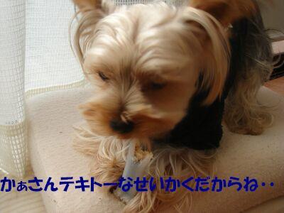 PHOTO625aa.jpg