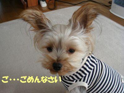 PHOTO634.jpg
