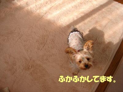 PHOTO645.jpg