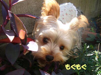 PHOTO662.jpg