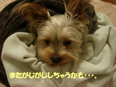 PHOTO665.jpg