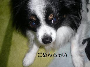 2011142.jpg